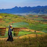 Aungban myanmar plantation fields