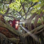 Bayan tree pindaya workshop photography